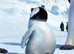 PingvinyPoiskChisel5[1]