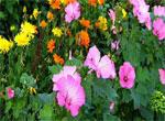 CvetochkiShodstva6[1]